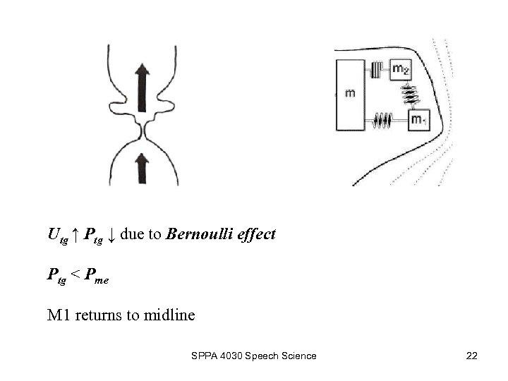Utg ↑ Ptg ↓ due to Bernoulli effect Ptg < Pme M 1 returns