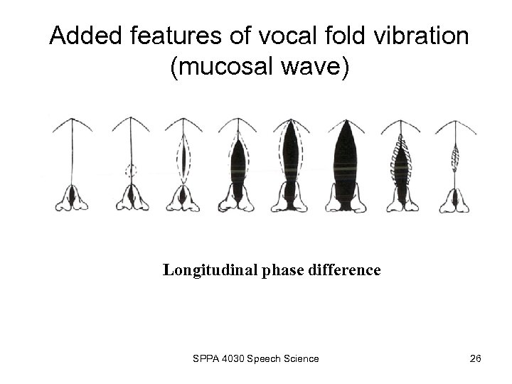 Added features of vocal fold vibration (mucosal wave) Longitudinal phase difference SPPA 4030 Speech