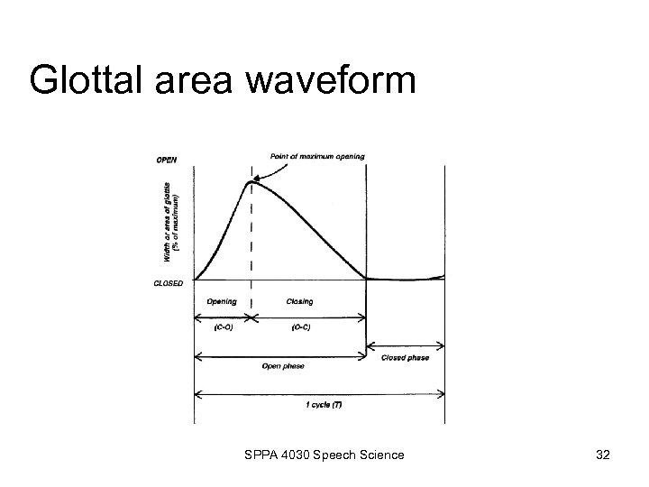 Glottal area waveform SPPA 4030 Speech Science 32