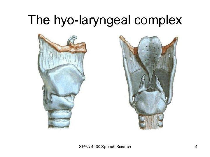 The hyo-laryngeal complex SPPA 4030 Speech Science 4