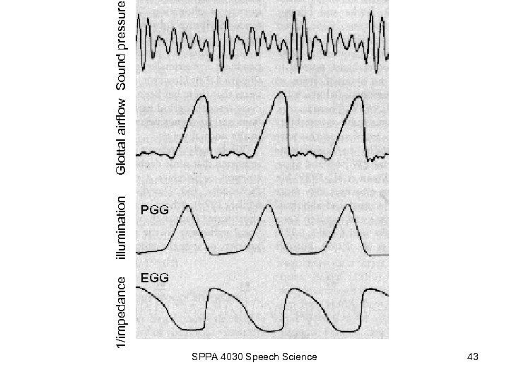 1/impedance illumination PGG EGG SPPA 4030 Speech Science 43 Glottal airflow Sound pressure