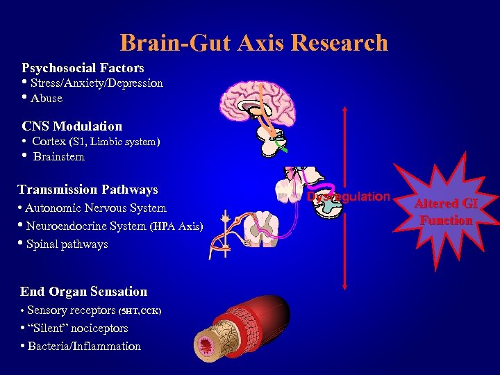 Brain-Gut Axis Research Psychosocial Factors • Stress/Anxiety/Depression • Abuse CNS Modulation • Cortex (S