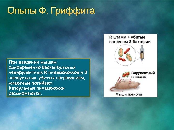 Опыты Ф. Гриффита При введении мышам одновременно бескапсульных невирулентных R-пневмококков и S -капсульных, убитых