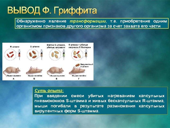 ВЫВОД Ф. Гриффита Обнаруженно явление трансформации, т. е. приобретение одним организмом признаков другого организма