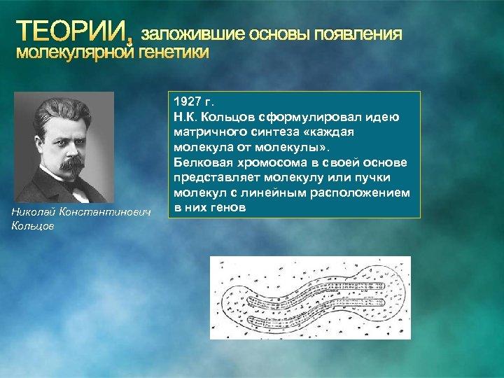 ТЕОРИИ, заложившие основы появления молекулярной генетики Николай Константинович Кольцов 1927 г. Н. К. Кольцов