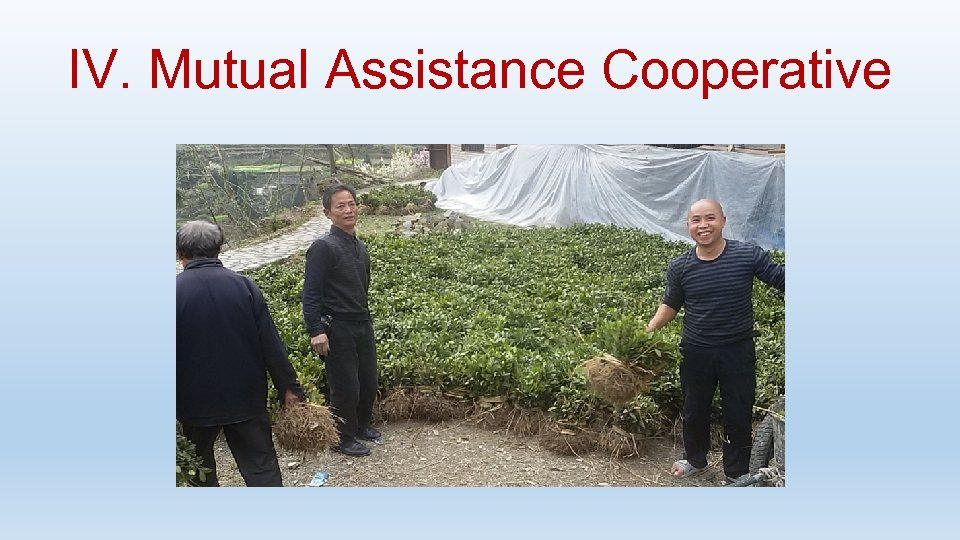 IV. Mutual Assistance Cooperative