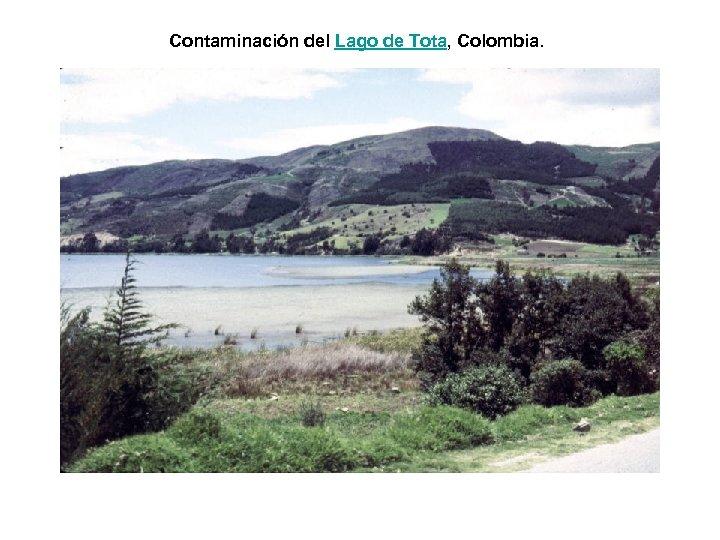 Contaminación del Lago de Tota, Colombia.