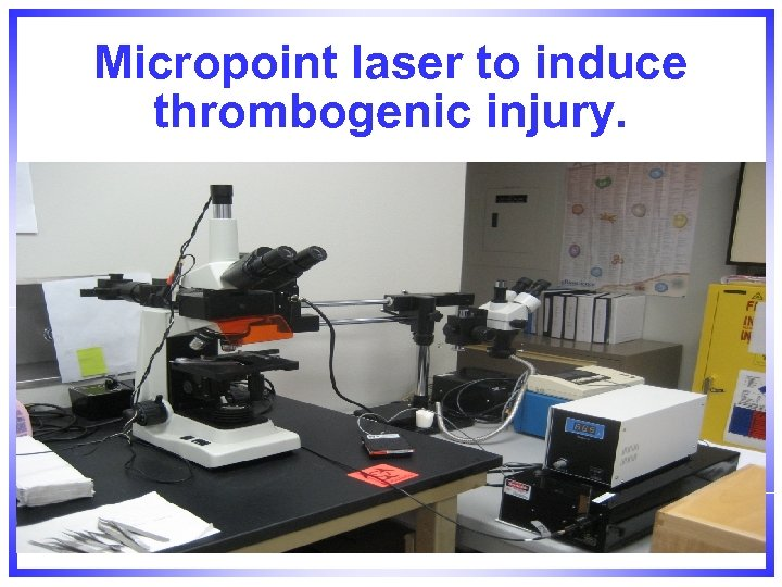 Micropoint laser to induce thrombogenic injury.