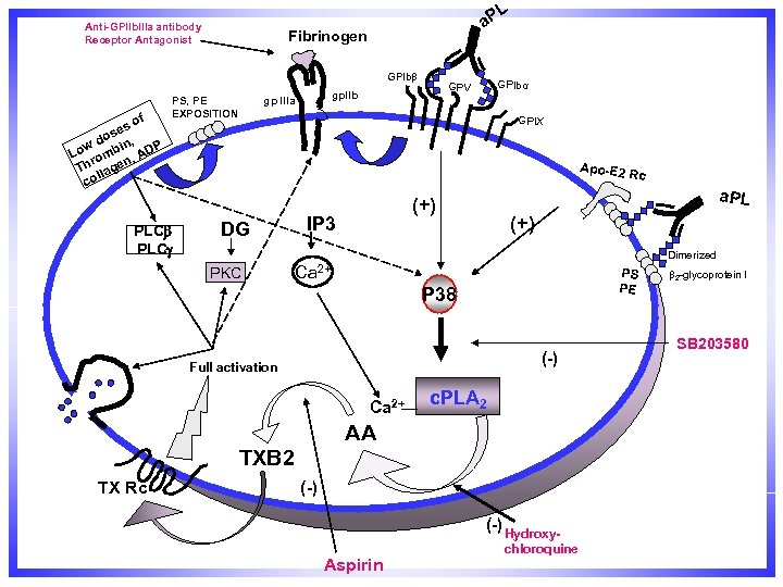 L Anti-GPIIb. IIIa antibody Receptor Antagonist a. P Fibrinogen GPIbβ f so se do