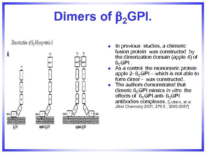 Dimers of 2 GPI. u u u In previous studies, a chimeric fusion protein