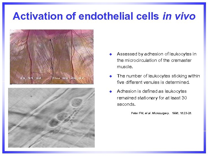 Activation of endothelial cells in vivo u Assessed by adhesion of leukocytes in the