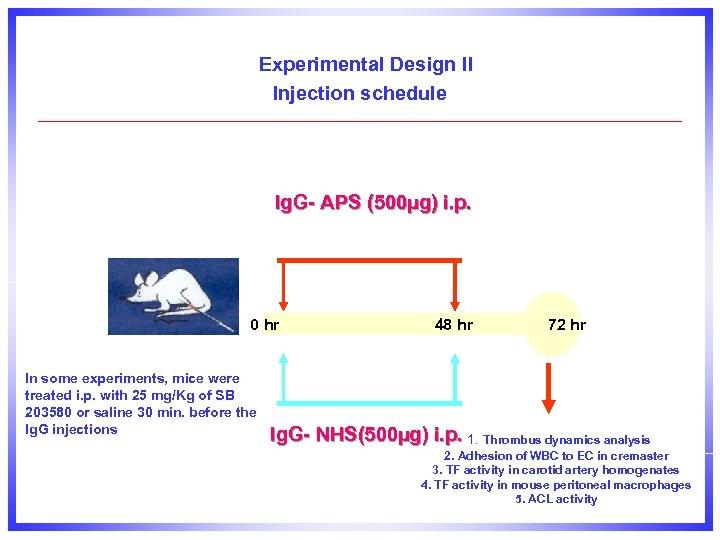 Experimental Design II Injection schedule Ig. G- APS (500µg) i. p. 0 hr In