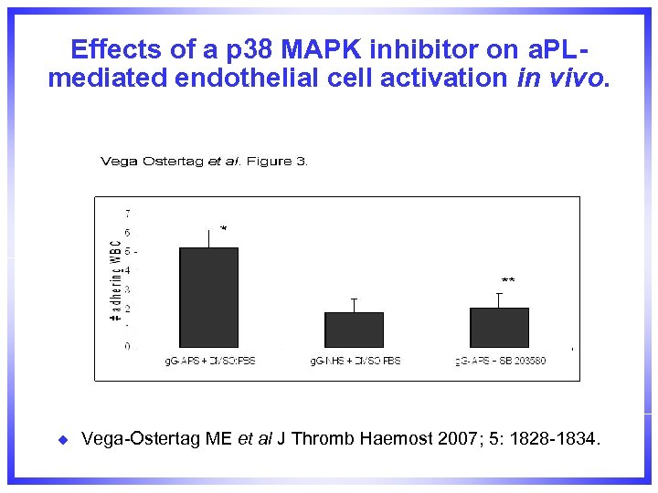 Effects of a p 38 MAPK inhibitor on a. PLmediated endothelial cell activation in
