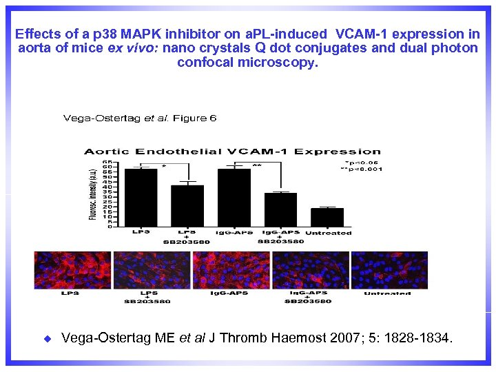 Effects of a p 38 MAPK inhibitor on a. PL-induced VCAM-1 expression in aorta