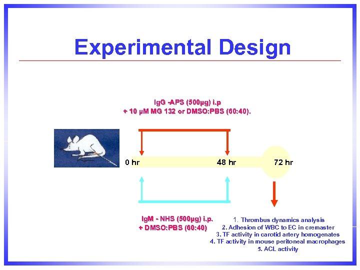 Experimental Design Ig. G -APS (500µg) i. p + 10 µM MG 132 or