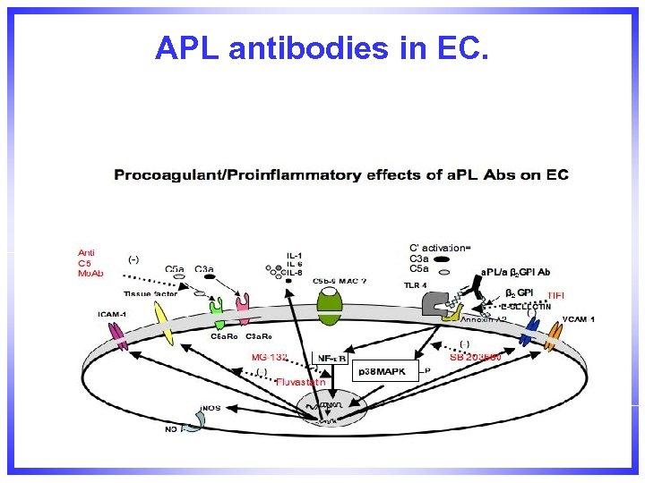 APL antibodies in EC.