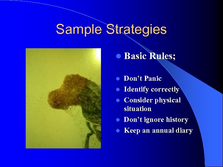 Sample Strategies l Basic l l l Rules; Don't Panic Identify correctly Consider physical