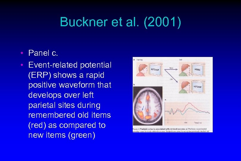 Buckner et al. (2001) • Panel c. • Event-related potential (ERP) shows a rapid