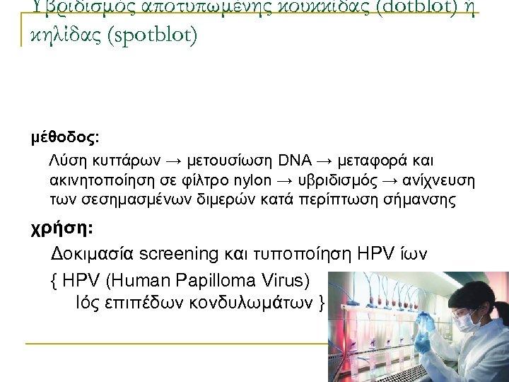 Υβριδισμός αποτυπωμένης κουκκίδας (dotblot) ή κηλίδας (spotblot) μέθοδος: Λύση κυττάρων → μετουσίωση DNA →