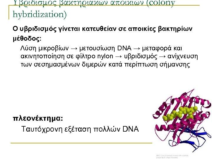 Υβριδισμός βακτηριακών αποικιών (colony hybridization) Ο υβριδισμός γίνεται κατευθείαν σε αποικίες βακτηρίων μέθοδος: Λύση