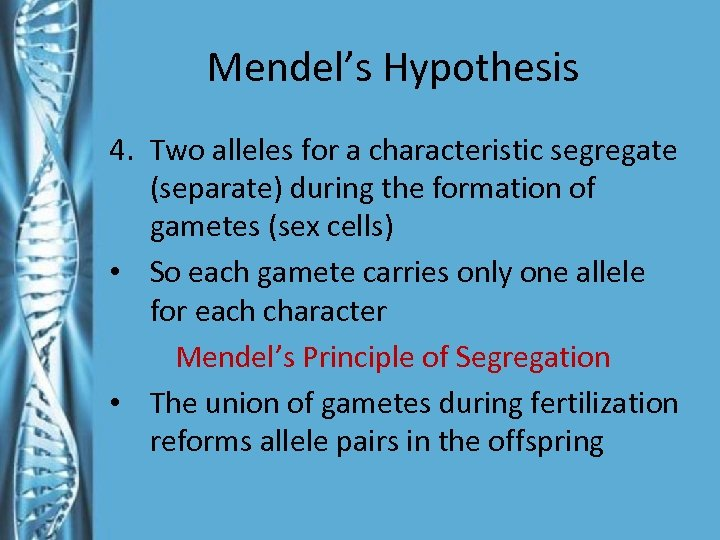 Mendel's Hypothesis 4. Two alleles for a characteristic segregate (separate) during the formation of