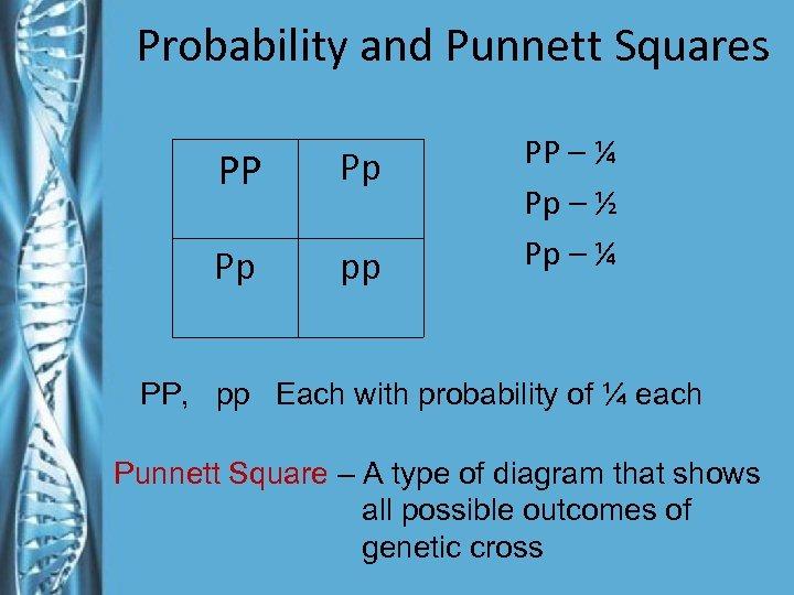Probability and Punnett Squares PP Pp Pp pp PP – ¼ Pp – ½