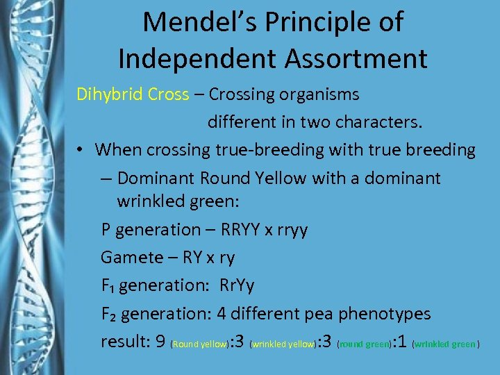 Mendel's Principle of Independent Assortment Dihybrid Cross – Crossing organisms different in two characters.