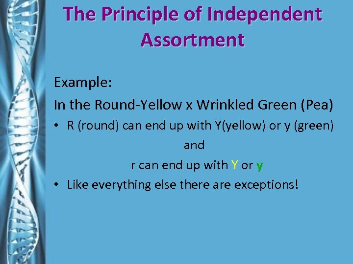 The Principle of Independent Assortment Example: In the Round-Yellow x Wrinkled Green (Pea) •