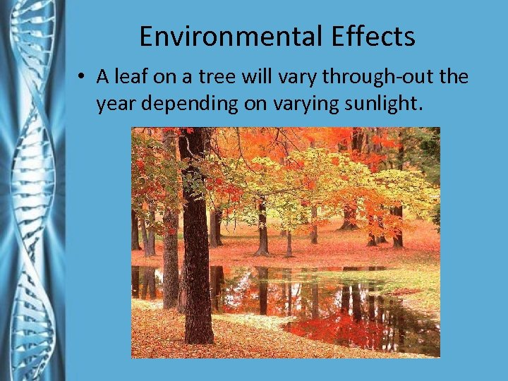 Environmental Effects • A leaf on a tree will vary through-out the year depending