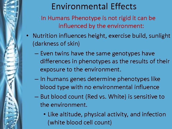 Environmental Effects In Humans Phenotype is not rigid it can be influenced by the