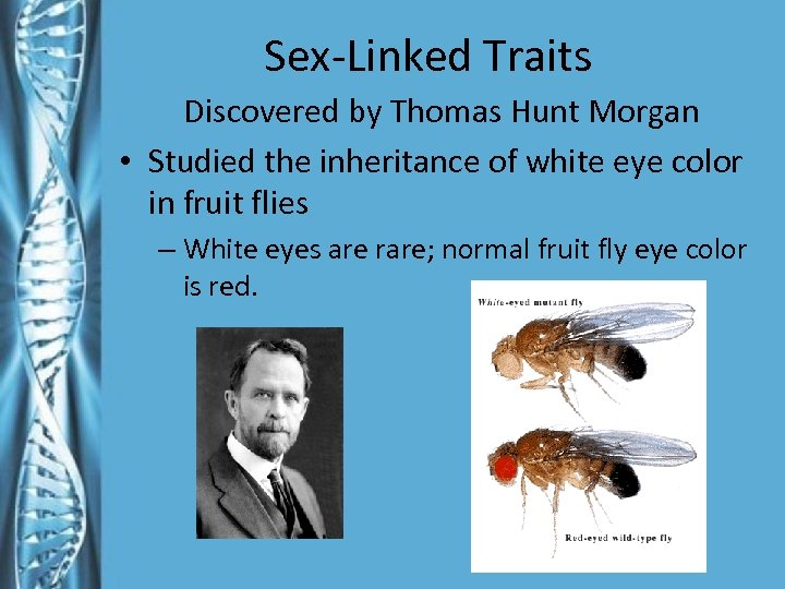 Sex-Linked Traits Discovered by Thomas Hunt Morgan • Studied the inheritance of white eye