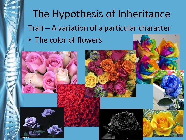 The Hypothesis of Inheritance Trait – A variation of a particular character • The