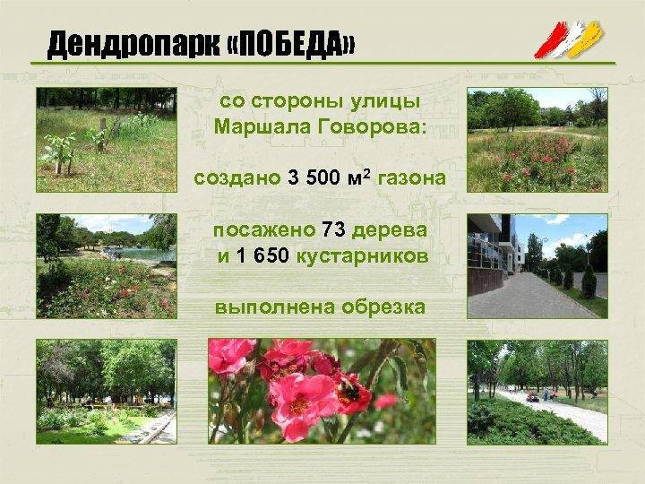 Дендропарк «ПОБЕДА» со стороны улицы Маршала Говорова: создано 3 500 м 2 газона посажено