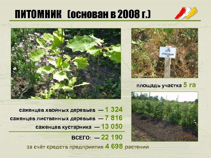 ПИТОМНИК (основан в 2008 г. ) площадь участка 5 саженцев хвойных деревьев — 1
