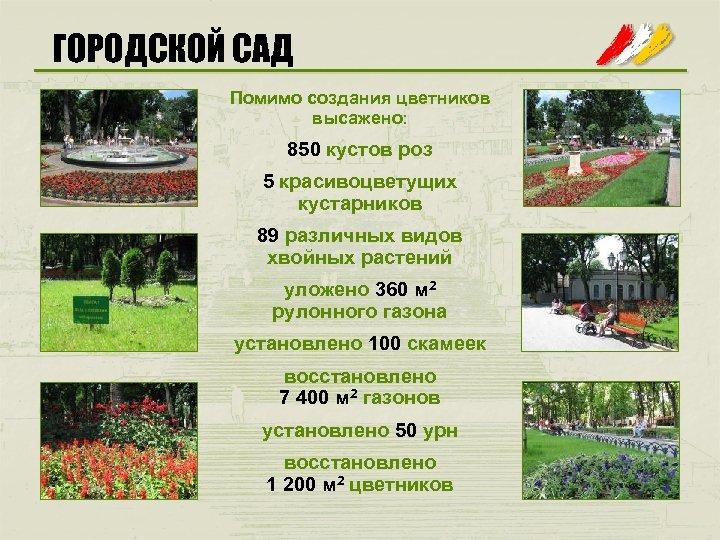 ГОРОДСКОЙ САД Помимо создания цветников высажено: 850 кустов роз 5 красивоцветущих кустарников 89 различных