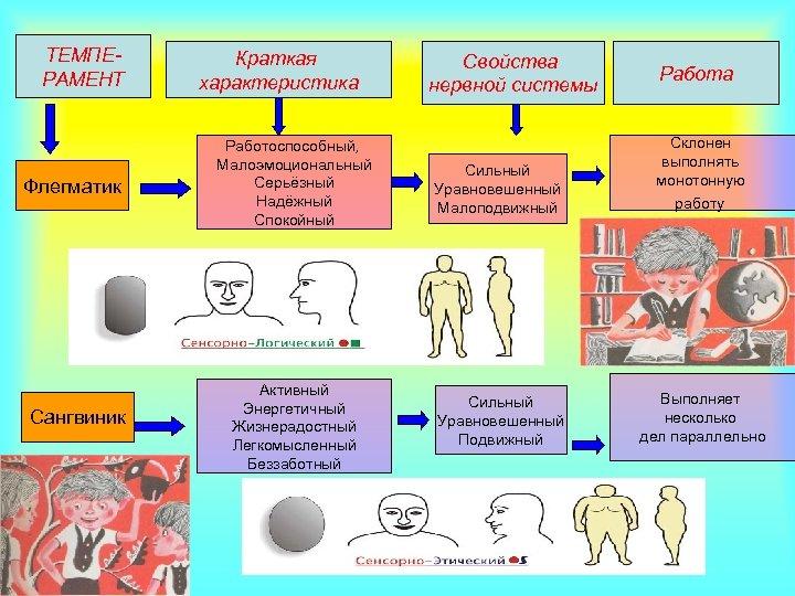 ТЕМПЕРАМЕНТ Флегматик Сангвиник Краткая характеристика Свойства нервной системы Работа Работоспособный, Малоэмоциональный Серьёзный Надёжный Спокойный