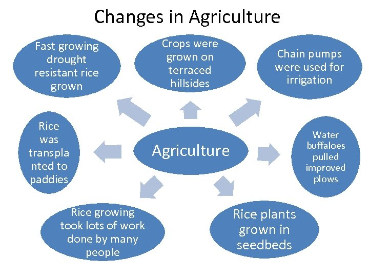 Changes in Agriculture Fast growing drought resistant rice grown Rice was transpla nted to