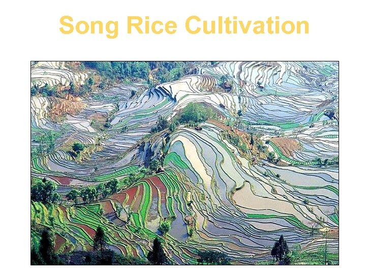 Song Rice Cultivation
