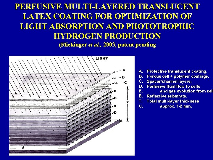 PERFUSIVE MULTI-LAYERED TRANSLUCENT LATEX COATING FOR OPTIMIZATION OF LIGHT ABSORPTION AND PHOTOTROPHIC HYDROGEN PRODUCTION