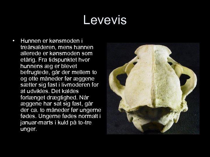 Levevis • Hunnen er kønsmoden i treårsalderen, mens hannen allerede er kønsmoden som etårig.
