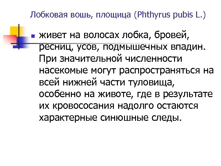Лобковая вошь, площица (Phthyrus pubis L. ) n живет на волосах лобка, бровей, ресниц,