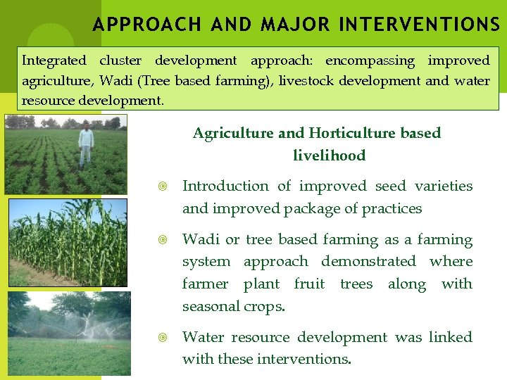 APPROACH AND MAJOR INTERVENTIONS Integrated cluster development approach: encompassing improved agriculture, Wadi (Tree based