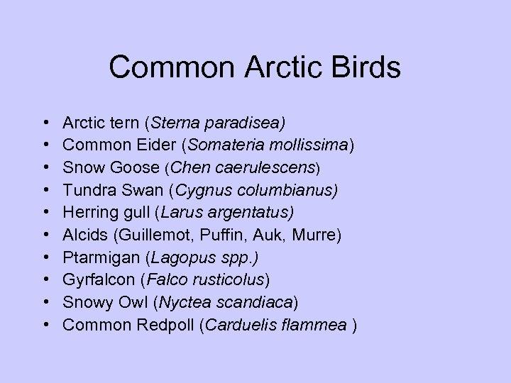 Common Arctic Birds • • • Arctic tern (Sterna paradisea) Common Eider (Somateria mollissima)