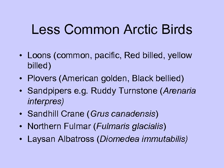Less Common Arctic Birds • Loons (common, pacific, Red billed, yellow billed) • Plovers