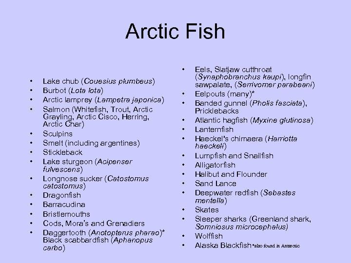 Arctic Fish • • • • Lake chub (Couesius plumbeus) Burbot (Lota lota) Arctic
