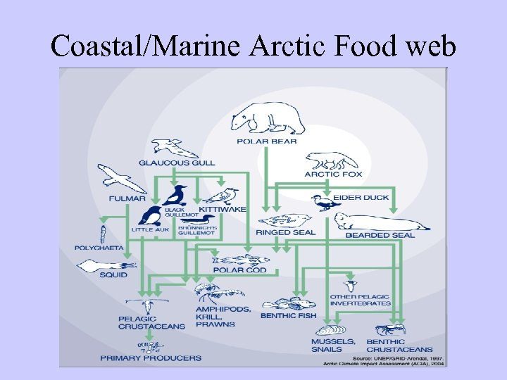 Coastal/Marine Arctic Food web