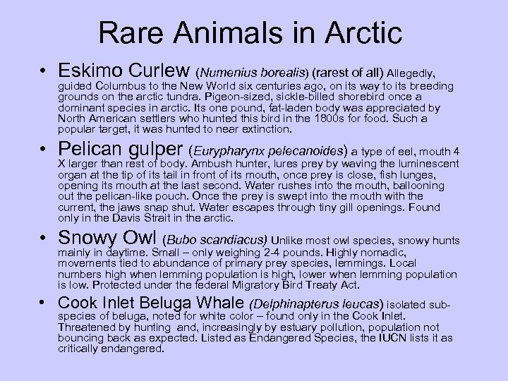 Rare Animals in Arctic • Eskimo Curlew (Numenius borealis) (rarest of all) Allegedly, guided