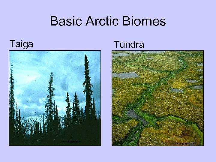 Basic Arctic Biomes Taiga Tundra www. runet. edu www. ulapland. fi/