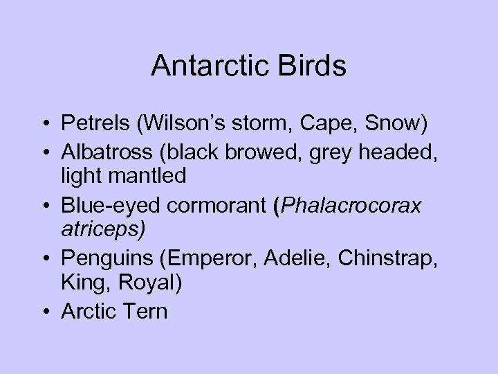 Antarctic Birds • Petrels (Wilson's storm, Cape, Snow) • Albatross (black browed, grey headed,