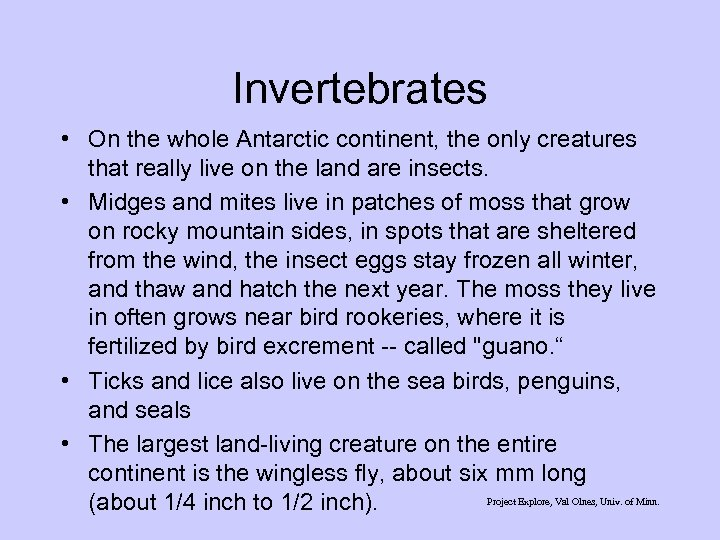 Invertebrates • On the whole Antarctic continent, the only creatures that really live on